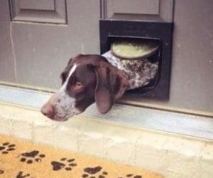 best smart dog door