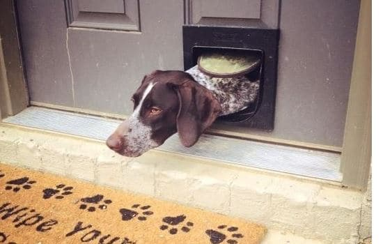 Best Dog Door for German Shorthaired Pointer