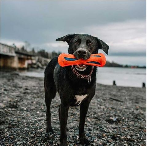 Chuckit! HydroSqueeze Bumper Dog Toy