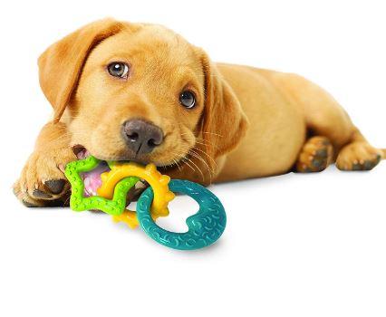 Nylabone Puppy Starter