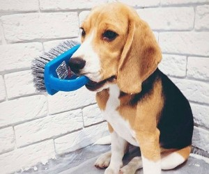 Best Beagles dog brush