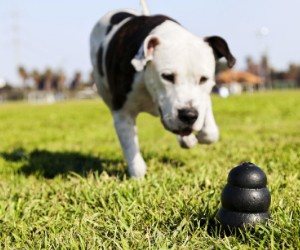 KONG Extreme Dog Toy - Toughest Natural Rubber, Black - Fun to Chew, Chase and Fetch