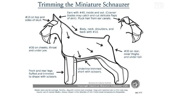 Schnauzer Trimming Chart