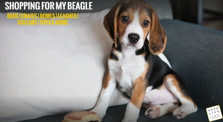 Shopping For My Beagle