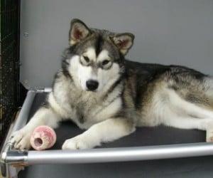 Kuranda Elevated Dog Bed